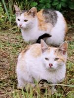 Kočky. Foto autor.